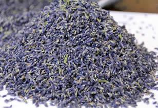 Fleurs de lavande officinale bleue